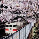 神戸サクラ通信その11「桜に惹かれて須磨浦公園で途中下車」