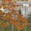 鹿沼公園の紅葉・黄葉! (2020年11月9日現在)