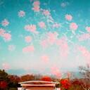 スキマセノビな日々
