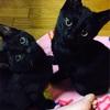 黒猫アイドル