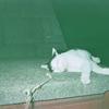 2006年賞味期限の「写ルンです」を現像に出してみた