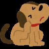 でも、最初は痒い犬は、食物アレルギーからスタートしたいワケ