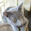 「猫は長者の生まれ変わり🐱 」と申します🤴 マロ様🐈今日も優雅な一日でございますよ🌹🌟