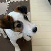 今日で「もずく」は4ヶ月。子犬から小さい犬へ。ずいぶん大きくなったなあ