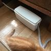 猫を室内で飼うための対策 ~猫を感電から守る電気コード対策~
