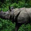 野生のインドサイに会える、チトワン国立公園の観光アクティビティに参加する【ネパール&タイ熱帯エリア旅行記②】