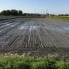 直播きをしたことと「秋の詩」の田植えと田んぼのザリガニ