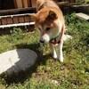 老犬ホームあん|小太郎、虹の橋を渡りました。