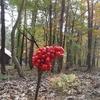 東北の秋キャンプにおススメ!棒パンと暖房で秋を満喫できますよ!