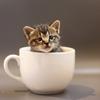 保護猫に出会ったら 第3回 ー給餌をしようー