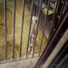 楽しい要素がコンパクトに詰まった『京都市動物園』