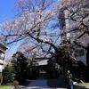 2019/03/24 浄円寺と高円寺駅前のしだれ桜