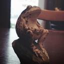 蛙と轍と御朱印巡り