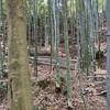 市民林業士活動①〜竹林整備〜