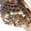 アパートに蜂の巣ができちゃった ( ;∀;)