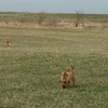 自由に散歩が出来るのはH牧場さん達のおかげです