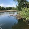 近所の川でバス釣り