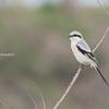 2020年3月7日の鳥撮り-滋賀県