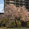桜のある風景と、たこ公園でたこ焼きの日