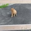 ネコを発見するうどん、ローラー93、Zwift-SST(Short)