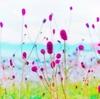 【とりあえず】同じ花の写真に見えますが。。。 2019/05/13