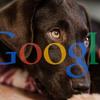 【犬版:増強】闘病時の情報収集、検索方法を考えてみよう ~コツを知る知らないで効率が違います~