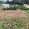 秋野菜の播種