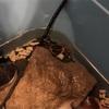 サワガニの餌