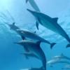 VRでイルカの群と泳ごう