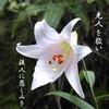 先敬後慈    養眞-11 長文