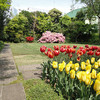 春の花と気まぐれな気温