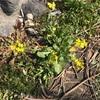 我が家の畑で春を見つけた