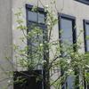 2015/04/19 リンゴの開花の姿が目立つ様になった