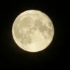 今夜(8月8日)は満月です。写経にいらっしゃいませんか?