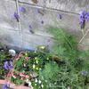 ラベンダーのお花♪