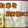 川越の五ツ星お米マイスターのいる米屋 小江戸市場カネヒロのお米博士がおすすめのお米