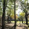 山の中の樹木公園と、休日の簡単ごはん