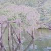 秋田市千秋公園「藤の花が咲く頃」の絵