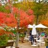 冬に見たい、箱根ガラスの森美術館のガラスのツリー