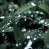 傘のうち・島崎藤村:しっとり濡れる雨の道行き