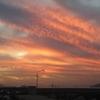 広島の釣り ~青物&カワハギ&アジ~ その2
