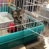 【保護猫】サラちゃん 動画UPしてみました!
