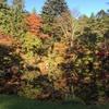 栃木庭園巡り・日光編。輪王寺庭園 逍遥園、日光田母沢御用邸記念公園、そして美しかった松屋敷庭園