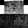 画像のエッジ抽出、ラプラシアンフィルタ