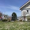 函館 春のお散歩