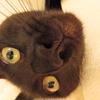 【大阪】営業パチンコ店名公表するも逆効果! 依存症はコロナの恐怖を超える!?