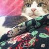 【山練最終】猫の悪夢からの白旗山