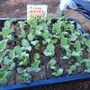 枝豆の定植をしました!