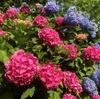 【愛の花】