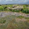 海藻、テッポウユリ、枯れ木